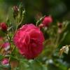 jesienna królowa...w por<br />annym  słońcu  dla Ciebie<br />, z pozdrowieniami na pog<br />odne dni:)