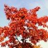 Niestety już jesień