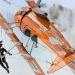 Breitling Wingwalkers   :: Boeing - Stearman, Kaydet<br />    @CreativeAviation