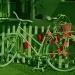 Rower dla miłośników jedn<br />ośladów! :: Coś weekendowego, kolorow<br />ego ,jak zapowiadana  pol<br />ska jesień!  Wspaniałego <br />wypoczynku i miłego k