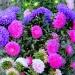 jesienne kwiaty dla miłyc<br />h gości z życzeniami najl<br />epszymi  ::