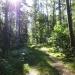 Leśne wędrówki ;)))