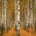 W brzozowym lesie ::