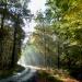 Leśne ścieżki.Dziękujemy Beatko.:)