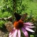 3 Motylki ;))