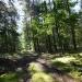 Leśne wędrówki ;))