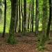 Drzewa nie istnieją osobno, tym co je łączy to korzenie...