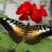 motylki dla Was z serdecznymi pozdrowieniami ....