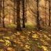 Żółty, jesienny liść... ::