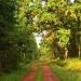 W lesie coraz piękniej :-<br />) Dobrego dnia:) ::