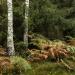 Idzie jesień wolnym kroki<br />em... ::