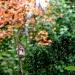 Barwy jesieni na piękne sny:)))