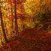 Już jesień...z pozdrowieniami