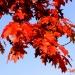 To już jesień