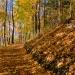 Piękna Pani Jesień zaprasza na spacer nad brzegiem jeziora i na skraju lasu