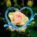 Róża w sercu