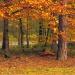 Jesiennie:)Pozdrawiam:)