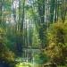 Oczko wodne w Lasach Nieporęckich