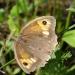 Motylka spotkałem :))