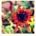 Co stało się kwiatom  ❀ܓ❀ܓ❀ܓ