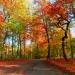 Jesienny las:)Pozdrawiam:)