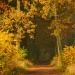 Szumi wiatr .... W suchych liściach wygwizduje swoje opowieści.:))Miłego popołudnia)