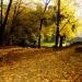 jesień..pozdrawiam serdecznie..