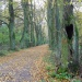 Aleja lipowa, pomnik przyrody, w Karolinie