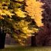 W jesiennych kolorach ...