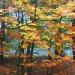 W kolorowym lesie:)