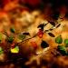 Kolory jesieni.