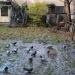gołębie odlecą przed zmierzchem