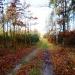 Jesienny Las ;)