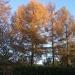 Jesień skąpana w słońcu