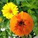 Wspomnienie z Botanika.....