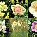 Kolaż z grafiką kwiatową dla Ciebie z pozdrowieniami