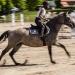 Jak nazywa się jeździec dosiadający kłusującego konia? Kłusownik?